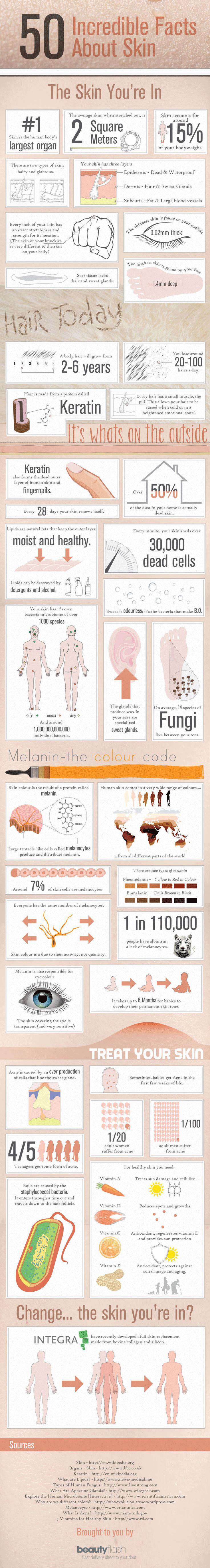 Infographic 50 Feiten over de huid