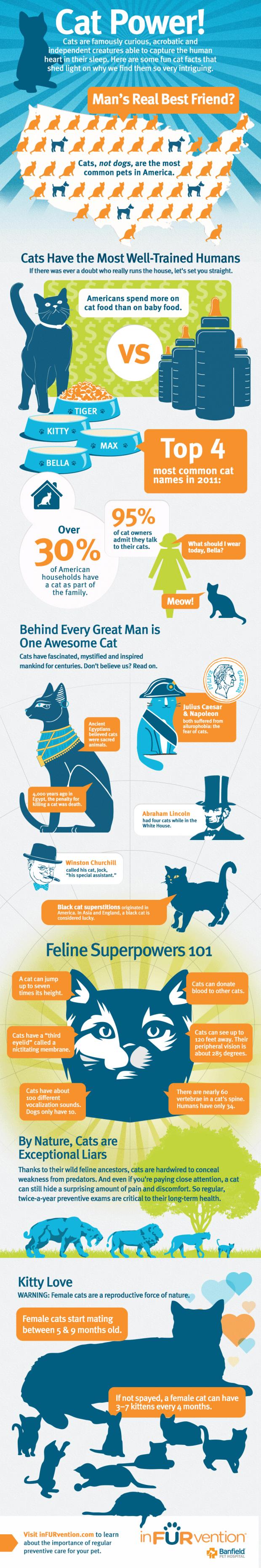 Infographic Katten aan de macht