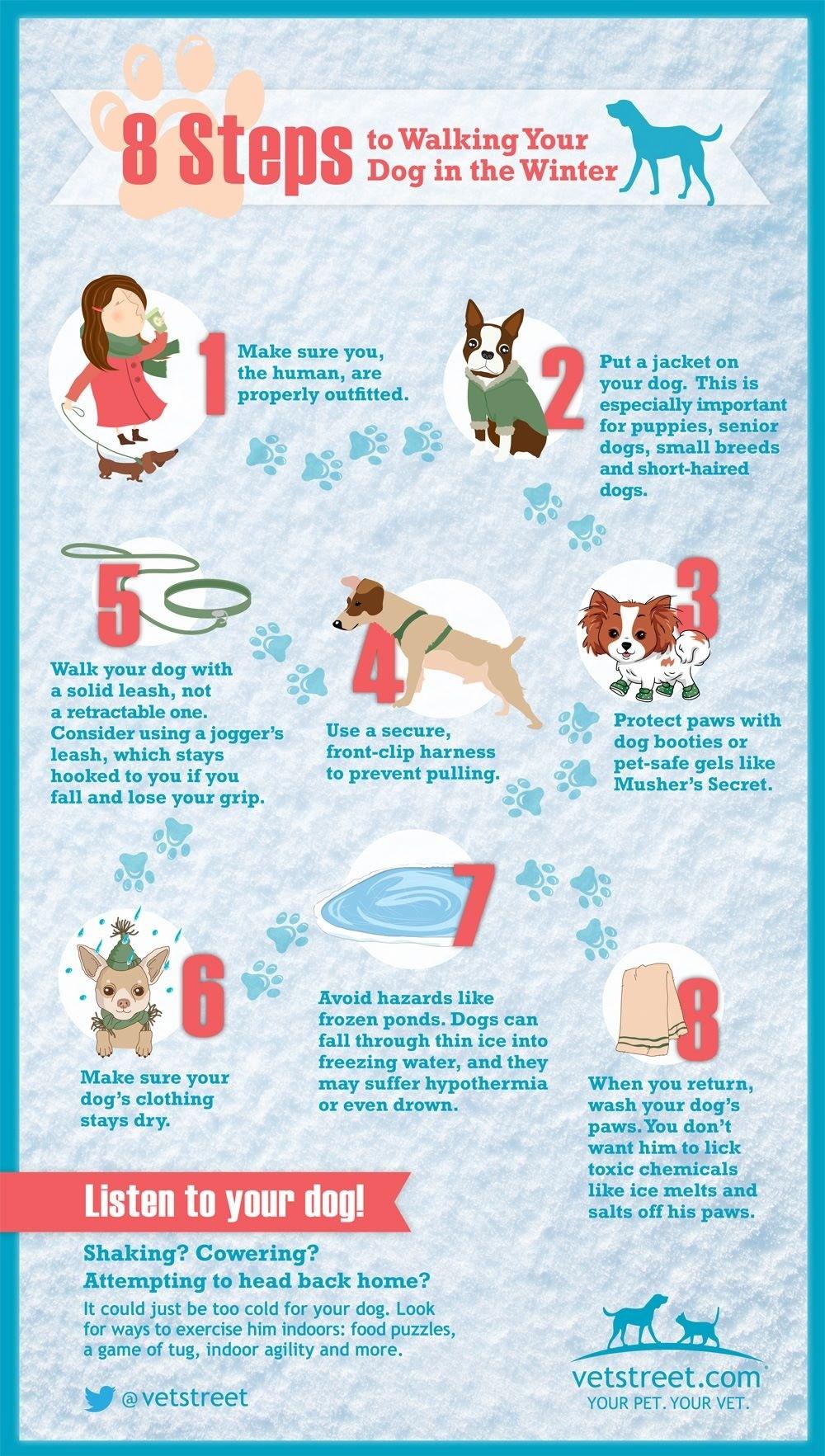Infographic Hond uitlaten in de winter