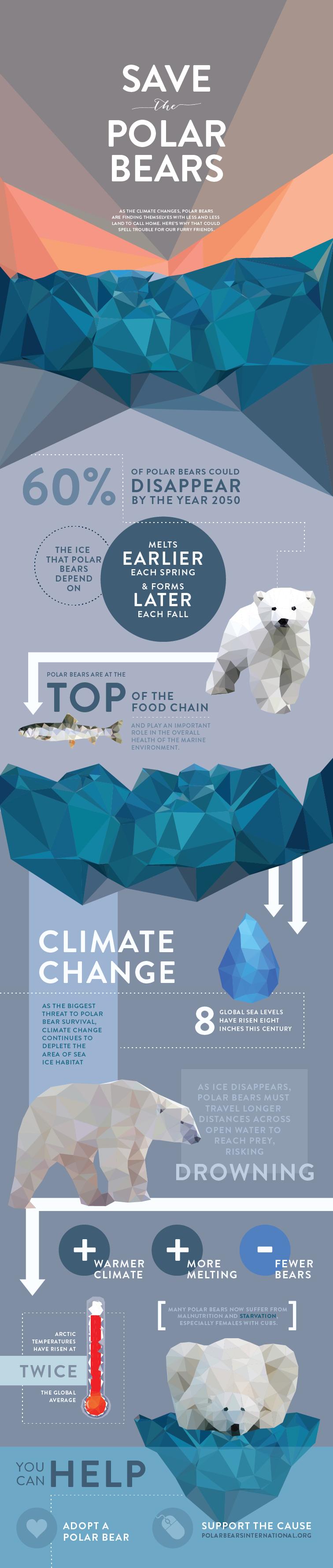 Infographic Red de dieren: ijsberen
