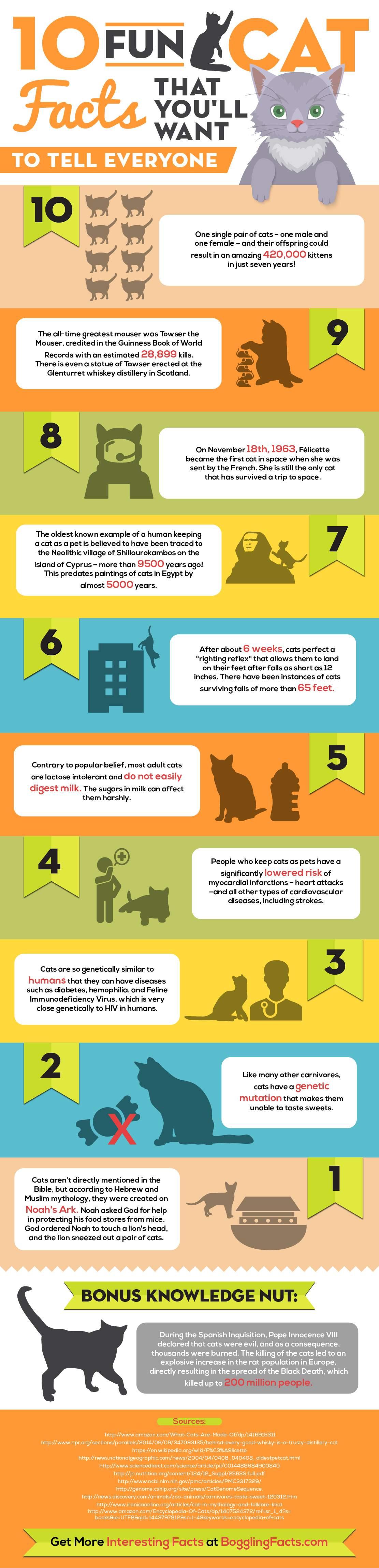 Infographic katten feitjes