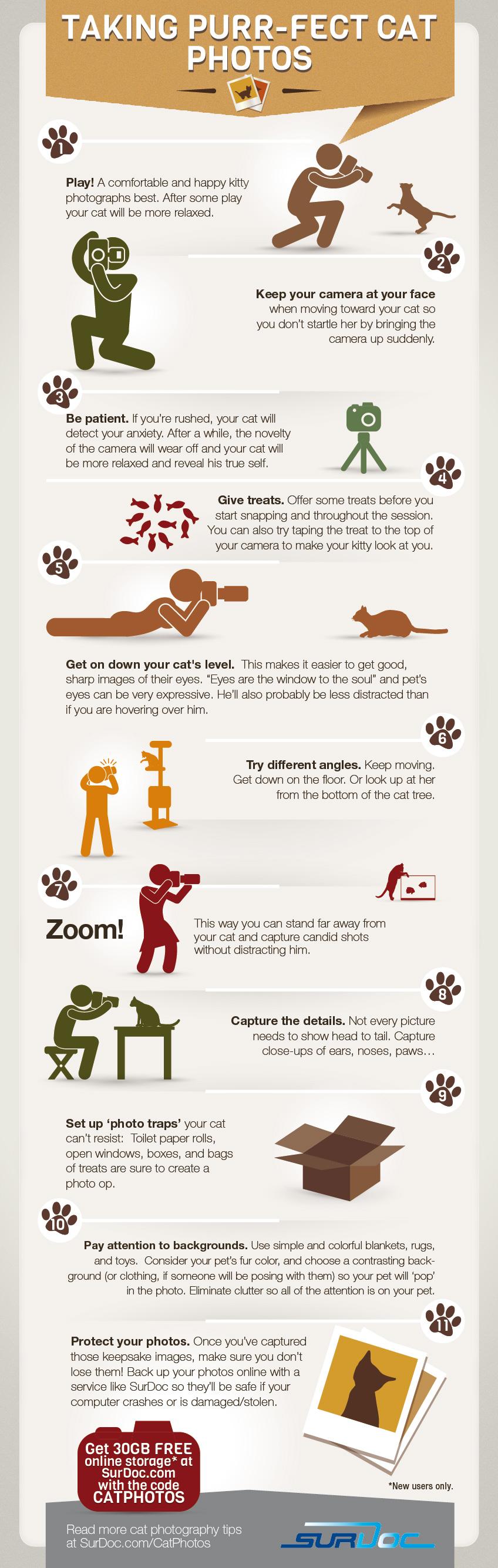 Infographic 100 katten foto's