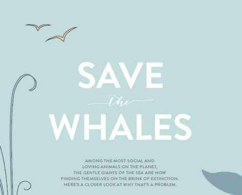 red de dieren: walvissen