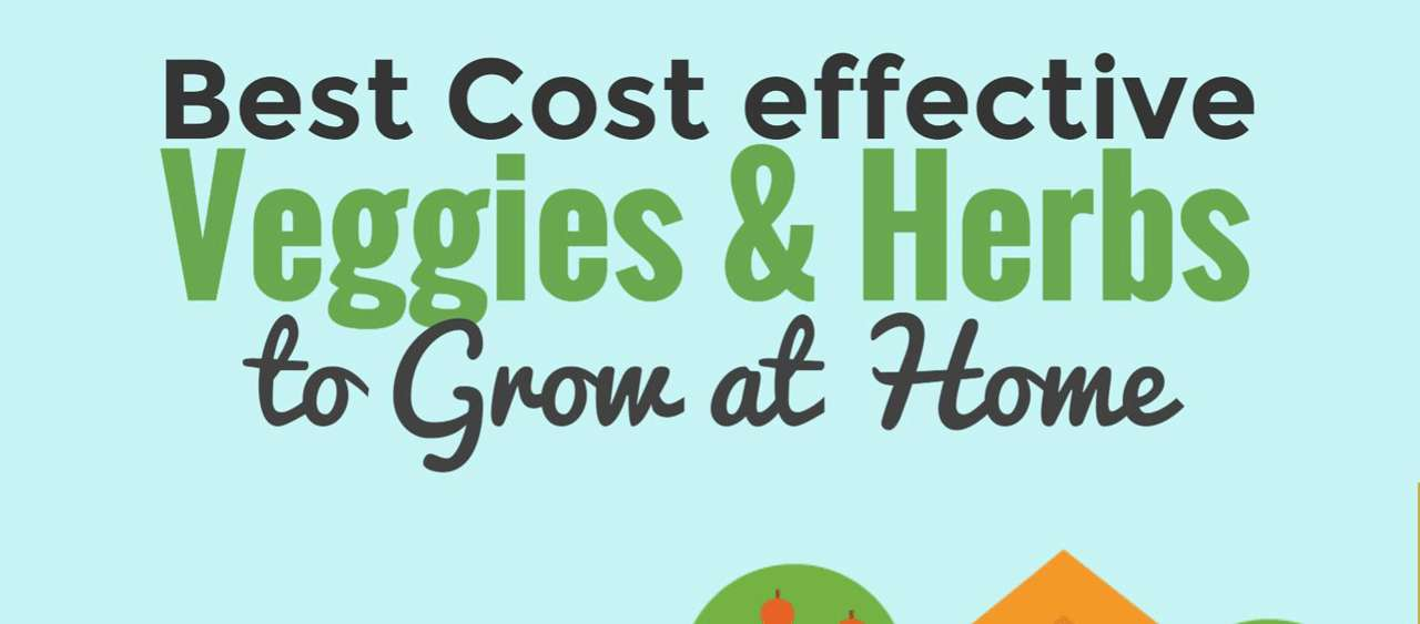 Een thumbnail van een infographic die over het verbouwen van groenten gaat