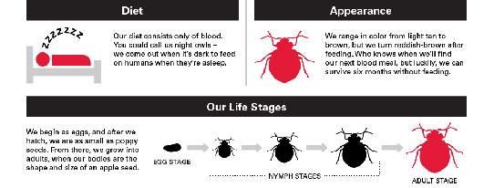 Een infographic over bedwantsen.