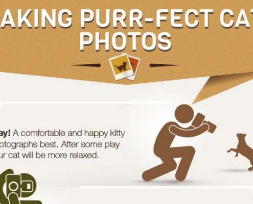 Katten Foto's Infographic Thumbnail