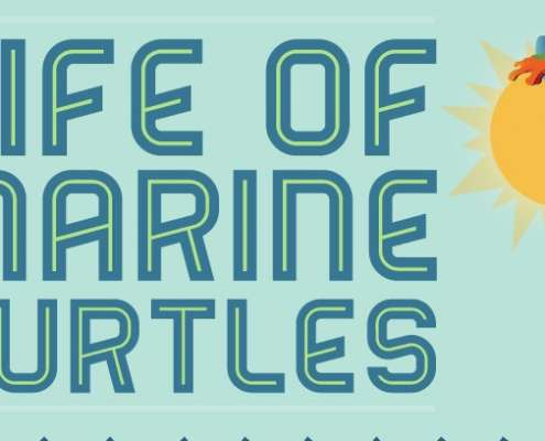 Thumbnail infographic leven marine schildpad.