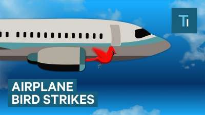 Infographic over wat er gebeurd wanneer een vogel in de motor van een vliegtuig komt