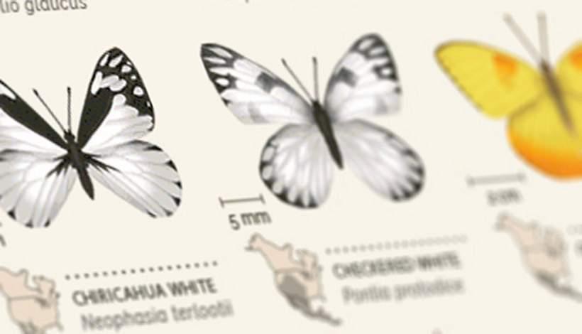 verschillende vlinder soorten