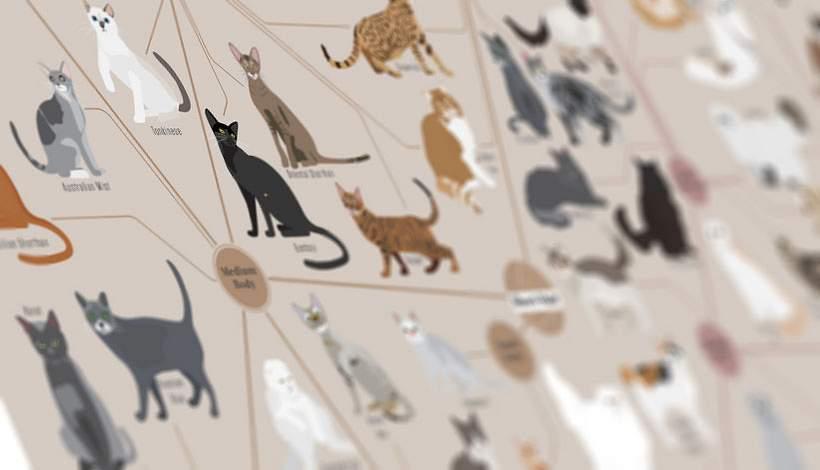 katten soorten