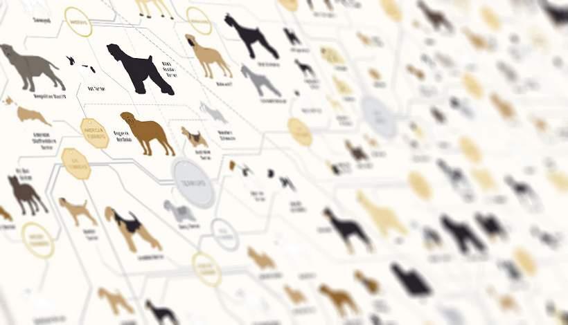 Soorten honden