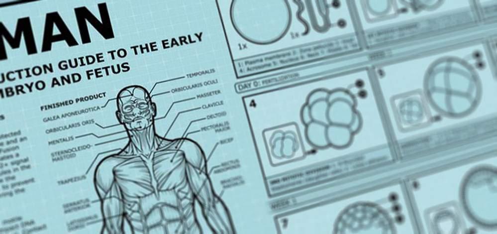 een bouwhandleiding voor het menselijk embryo